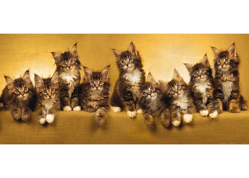 Koťata, AG Design, fototapeta ekologická vliesová do obývacího pokoje, ložnice, jídelny, kuchyně, lepidlo součástí balení, 202x90