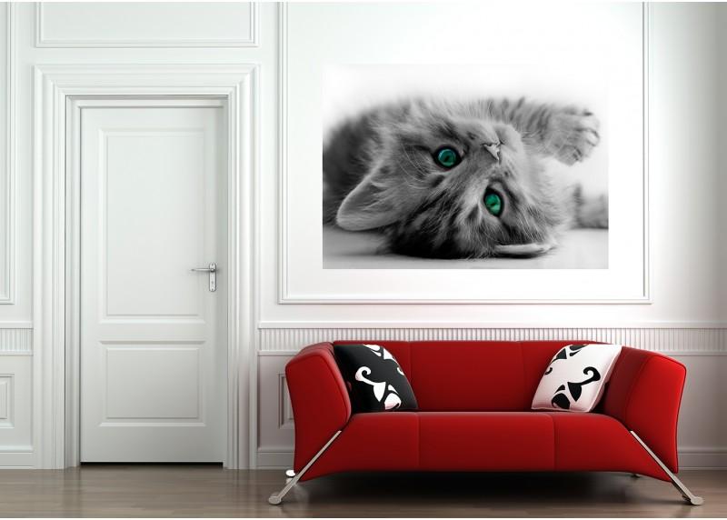 Malé kotě, AG Design, fototapeta ekologická vliesová do obývacího pokoje, ložnice, jídelny, kuchyně, lepidlo součástí balení, 160x110