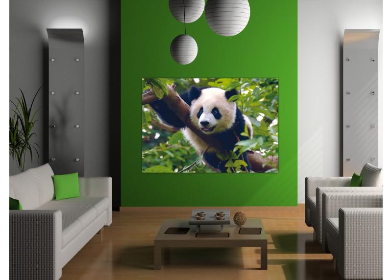 Panda, AG Design, fototapeta ekologická vliesová do obývacího pokoje, ložnice, jídelny, kuchyně, lepidlo součástí balení, 160x110
