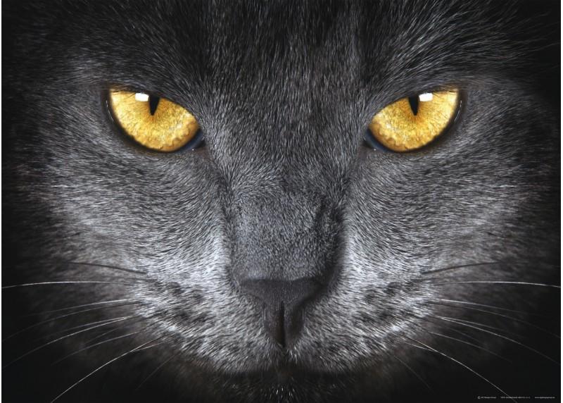 Kočičí očí, AG Design, fototapeta ekologická vliesová do obývacího pokoje, ložnice, jídelny, kuchyně, lepidlo součástí balení, 160x110