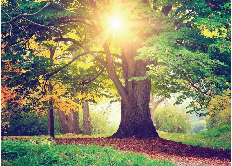 Dub v záři slunce, AG Design, fototapeta ekologická vliesová do obývacího pokoje, ložnice, jídelny, kuchyně, lepidlo součástí balení, 160x110