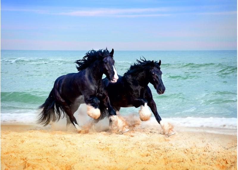 Koně, AG Design, fototapeta ekologická vliesová do obývacího pokoje, ložnice, jídelny, kuchyně, lepidlo součástí balení, 160x110