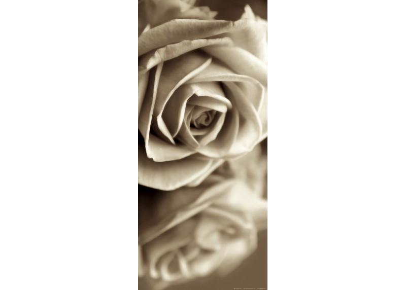 Černobílá růže, AG Design, fototapeta ekologická vliesová do obývacího pokoje, ložnice, jídelny, kuchyně, lepidlo součástí balení, 90x202