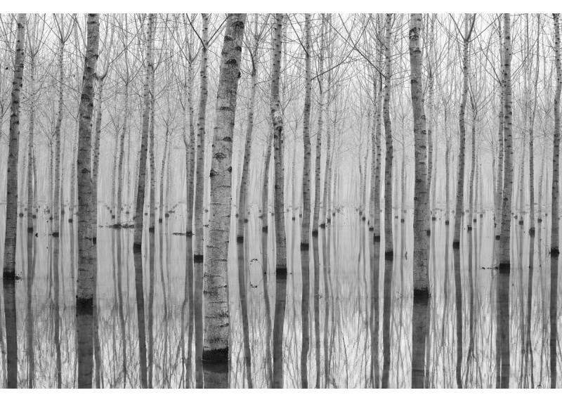 Abstrakce břízový les, AG Design, fototapeta ekologická vliesová do obývacího pokoje, ložnice, jídelny, kuchyně, lepidlo součástí balení, 360x270