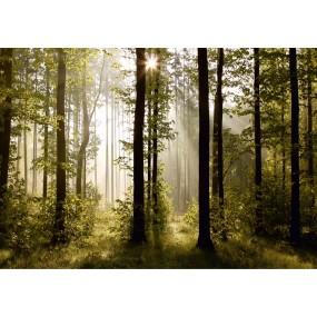 Magický les, papírová fototapeta do obývacího pokoje, ložnice, jídelny, kuchyně či chaty, AG Design, 360 x 254 cm, FTS 0181